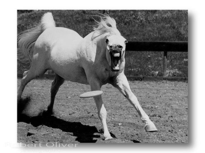 Horse Catching Frisbee with Mouth